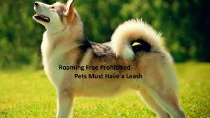 Dog Leash Law Miami Dade County City Of Miami Springs Florida Official Website