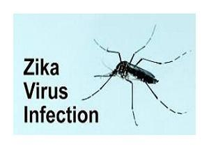 zika picture